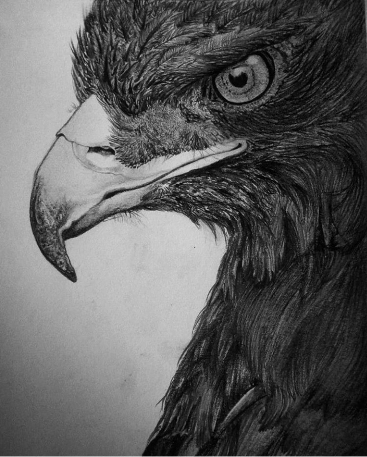 The Eagle-drawing Showflipper
