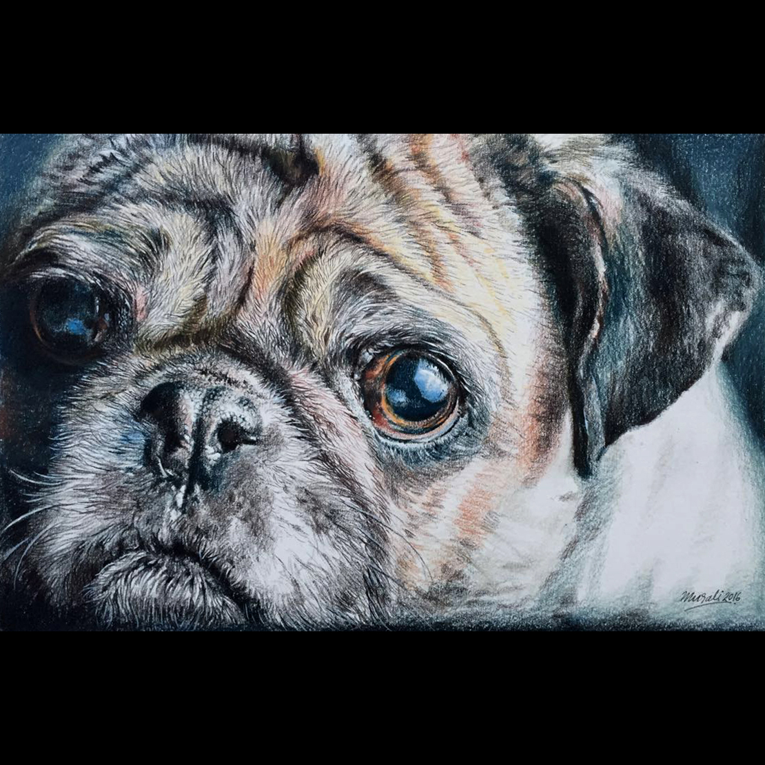 Pug Pencil Sketch Fine Art
