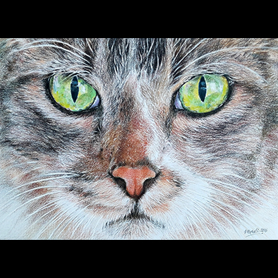 Wild Cat Realistic Drawing By Muralidhar Suvarna Drawing Fine Art For Sell