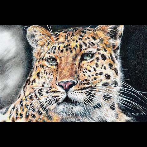 Leopard Fine Art