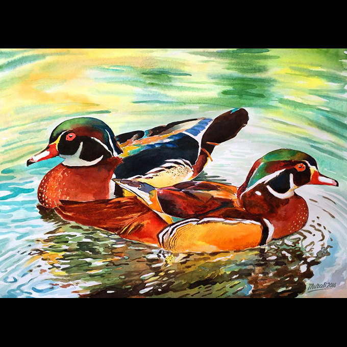 Ducks Fine Art