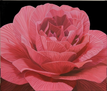 Red red rose Camellia Fine Art