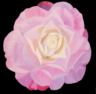 Queen Diana Camellia Fine Art