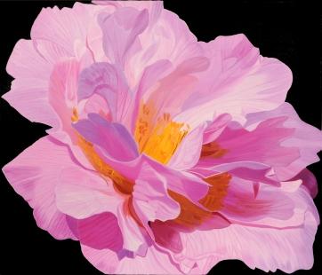Nonie Haydon Camellia Fine Art