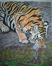 Tiger Drinking Fine Art