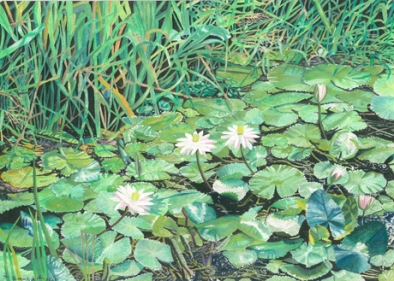 Goan Waterlilies Fine Art