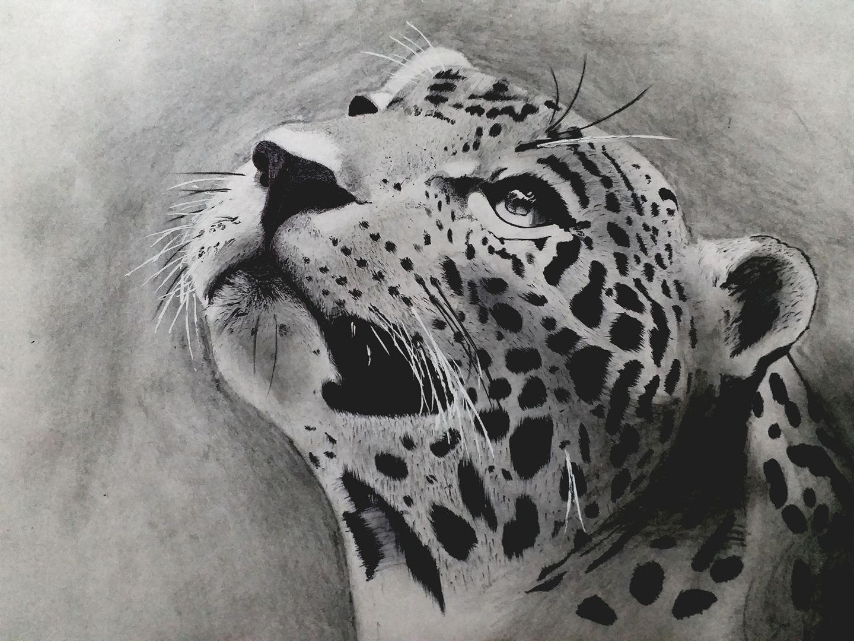 Leopard Sketch - KN Fine Art