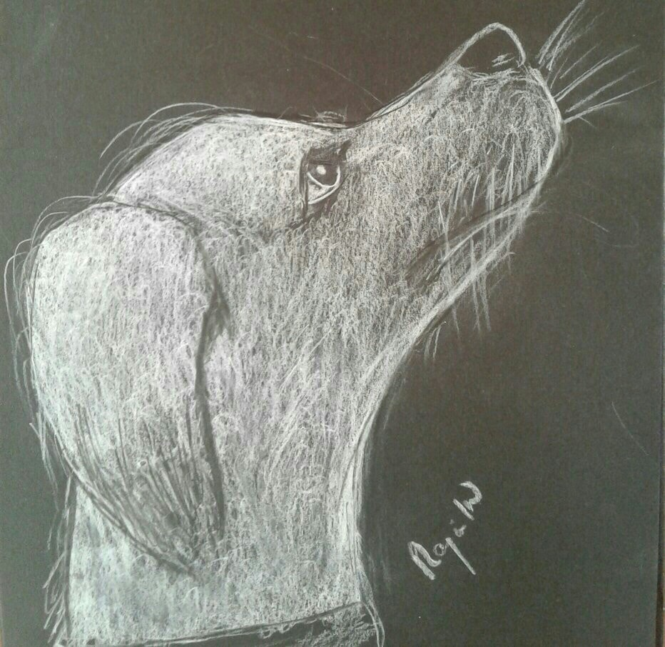 In Anticipation Fine Art Dog Sketch