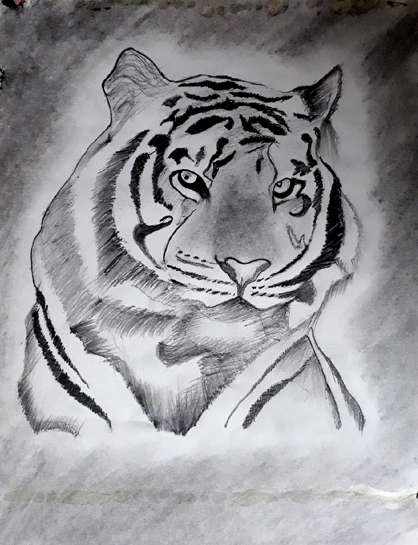 Tiger Graphite Work fine Art by VIKRAM CHOPDE