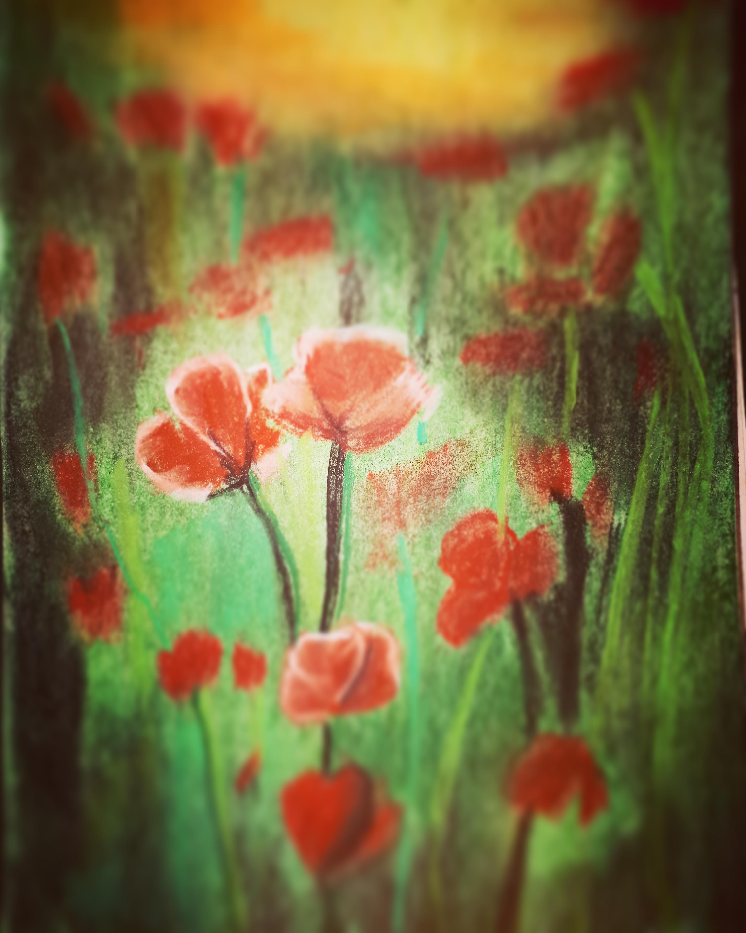 Poppy  Fine Art