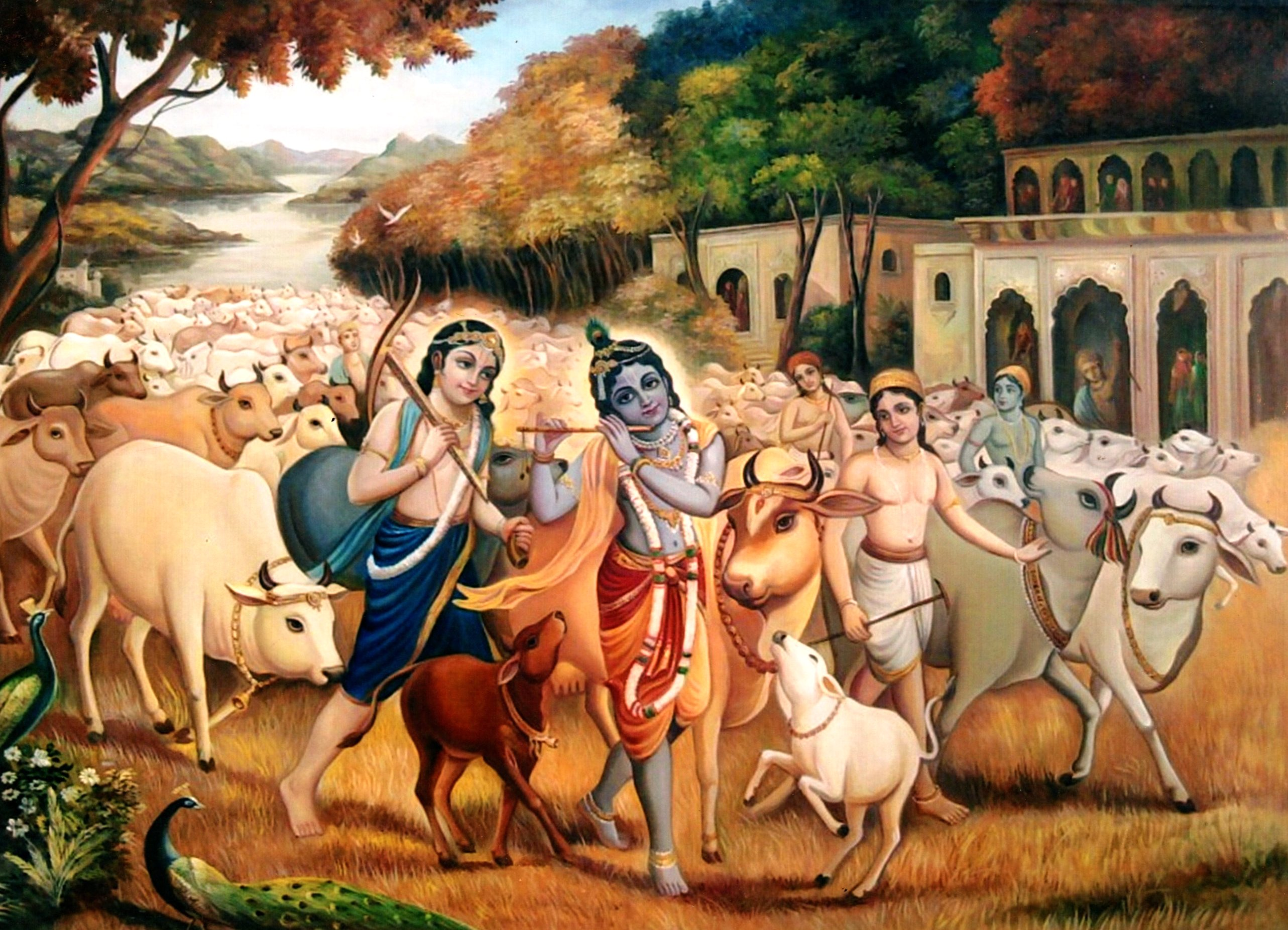 Krishna With Cows Fine Art