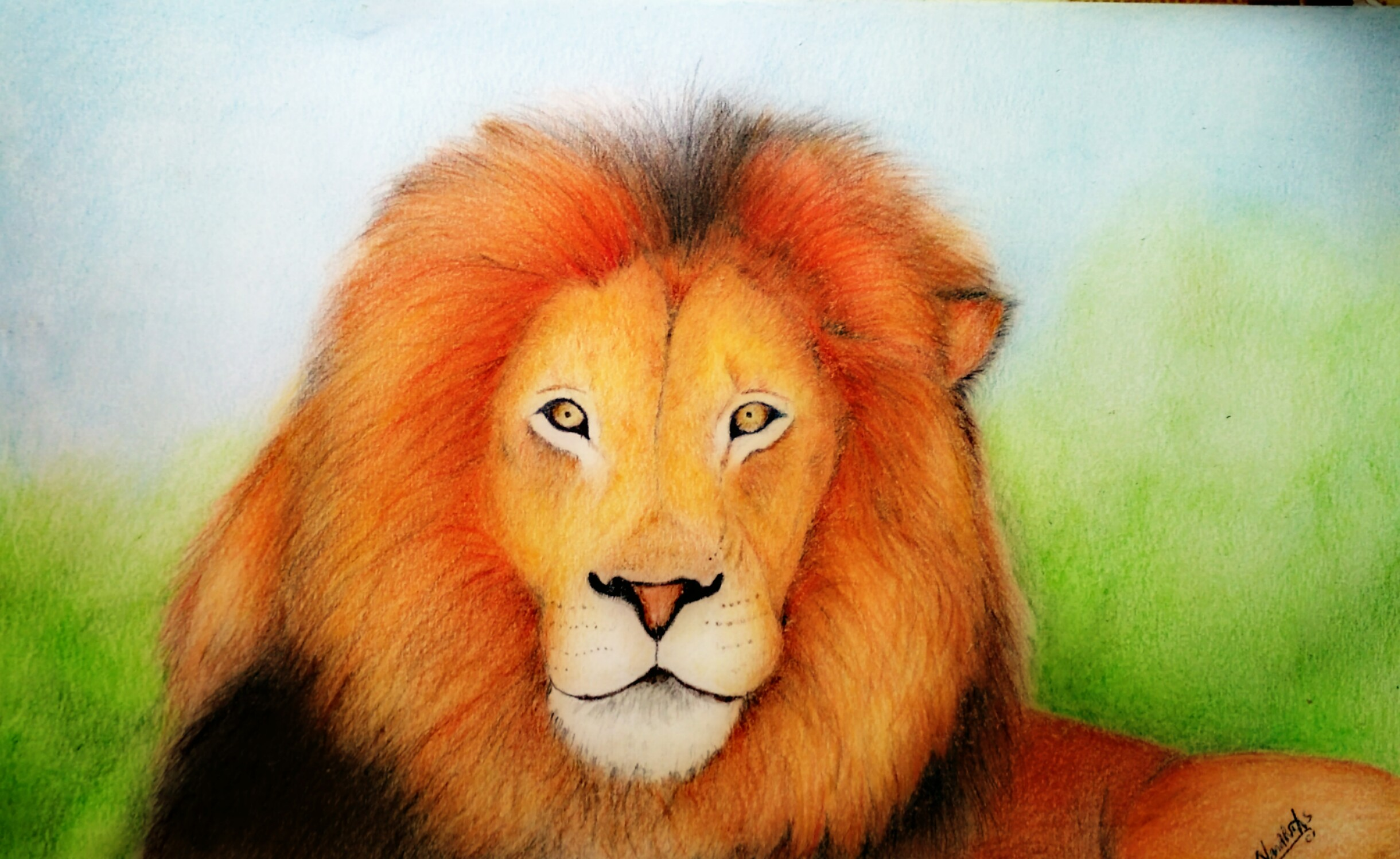 Lion Drawing Prismacolor