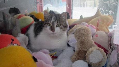 cat in claw machine