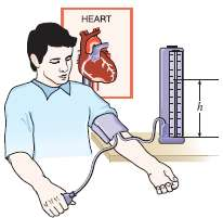The maximum blood pressure in the upper arm of a