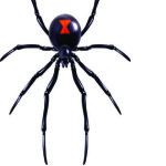 Small widow maker spider