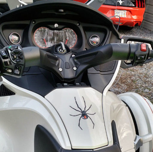 Small widow maker spider