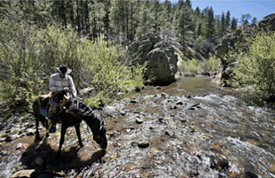 camping and horseback riding in the Gila