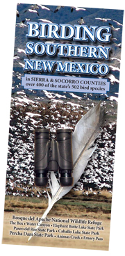 Southern New Mexico birding brochure