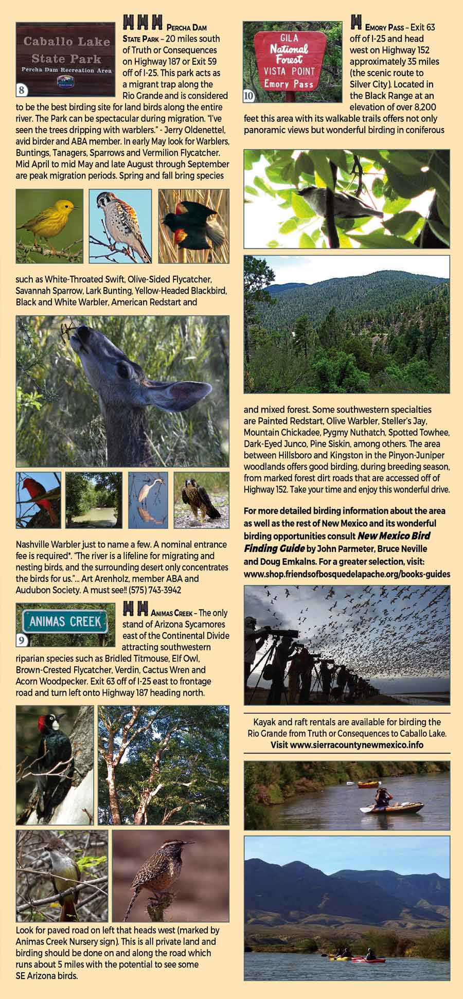 birding in Sierra County and Socorro County New Mexico