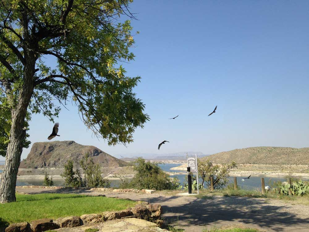 turkey vultures at Winding Roads Park in Elephant Butte NM