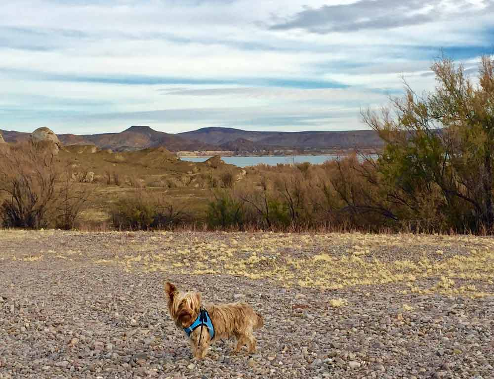 hiking companion: a leashed dog on the West Lakeshore hiking trail in Elephant Butte