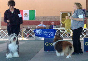 4-day AKC-sanctioned dog show in Truth or Consequences
