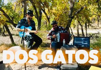 Dos Gatos at the TorC Brewing Company