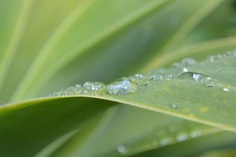 Raindrop Training / CARE Intensive