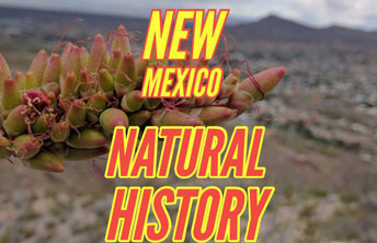 Natural History workshop at Desert Archaic