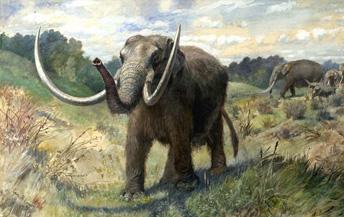 American Mastodon from the WikiCommons website