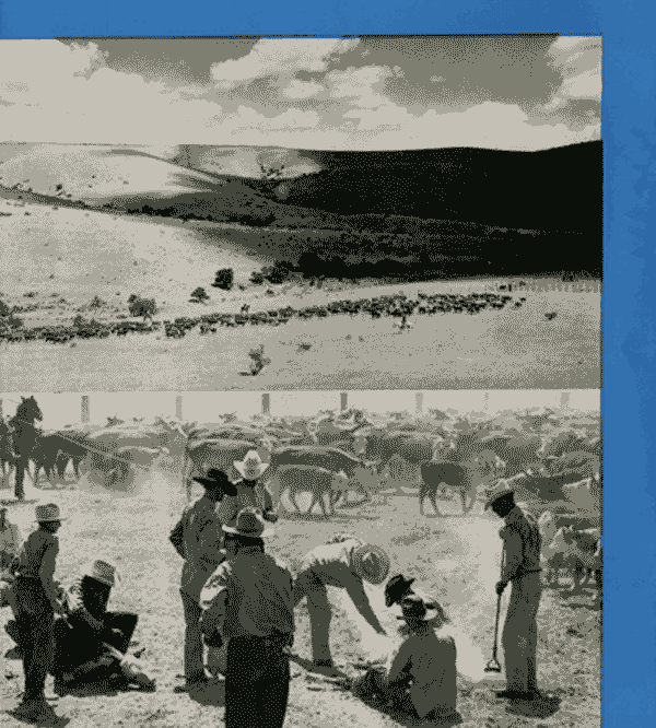 cattle drive - Hot Springs New Mexico, City of Health