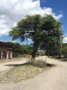 Chloride's Hanging Tree