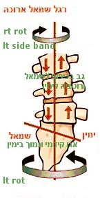 פיצוי הבדל גובה רגליים בגב התחתון.jpg