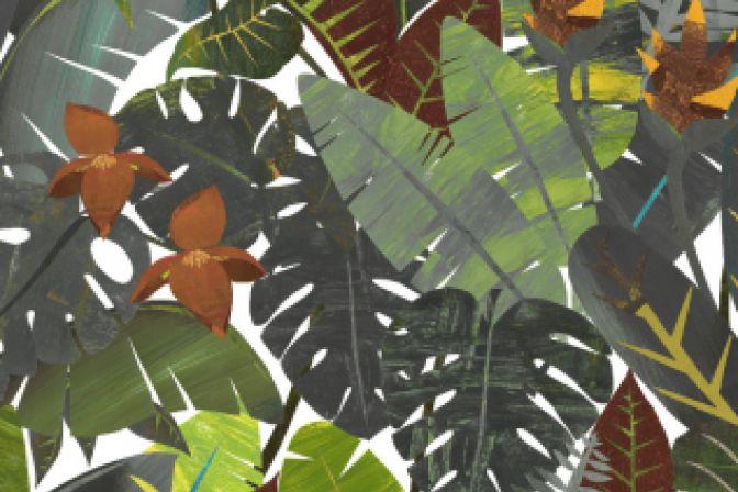 Amazonia Rio