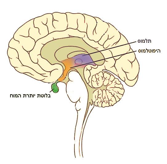 limbiccenter.jpg
