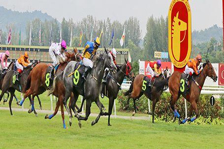 selangor-horse.jpg