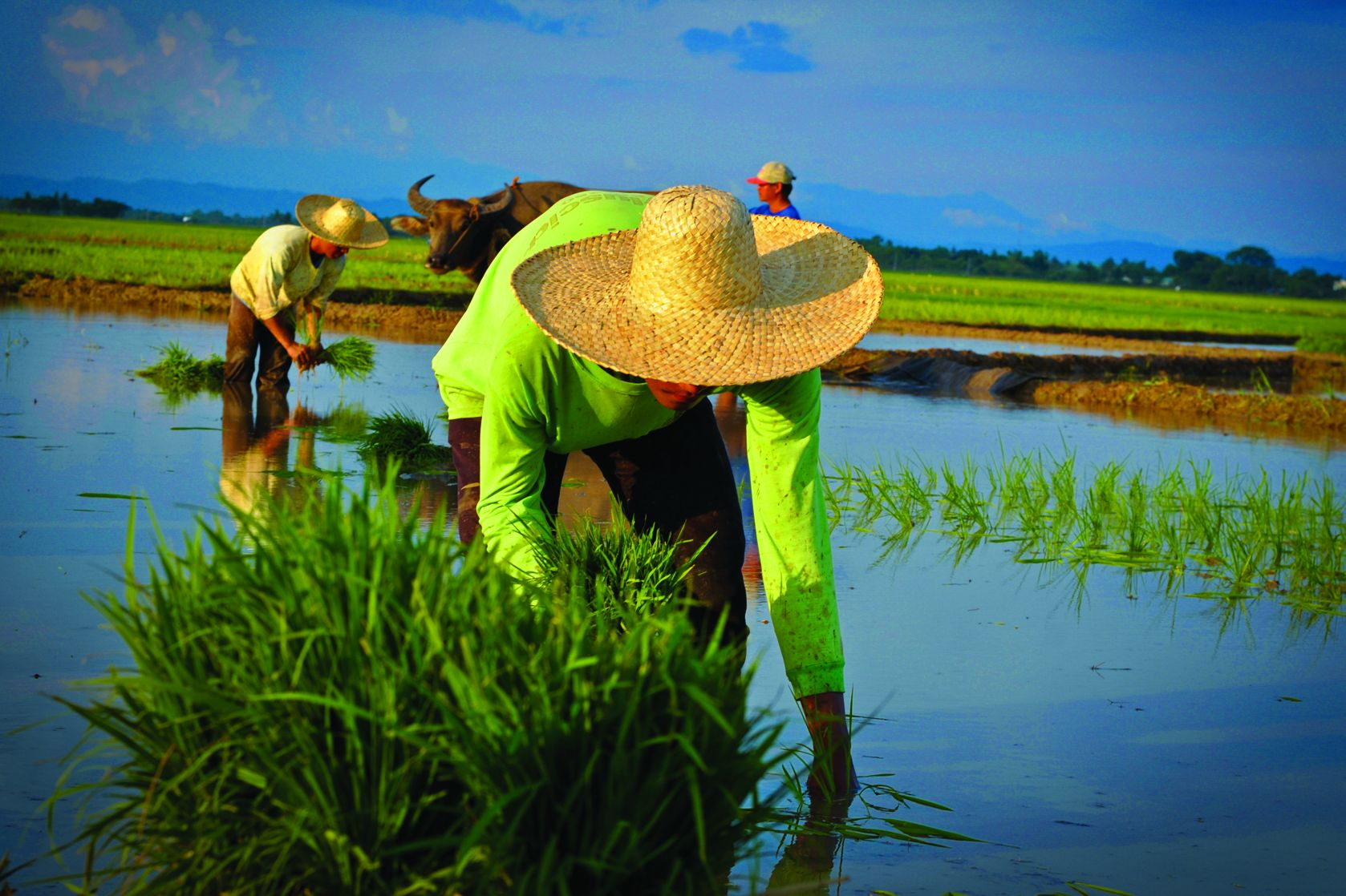 E Rice Farmer-0137-edited.jpg