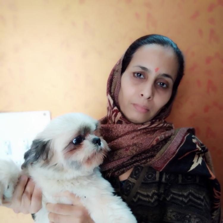 Dog Boarding in Delhi
