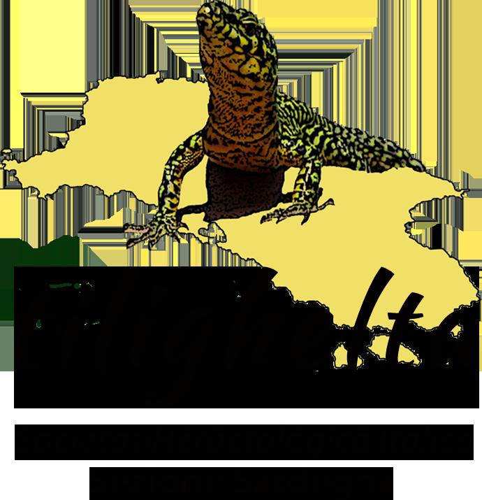 logo tilighelta2018.png