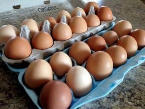 eggs-300x225.jpg