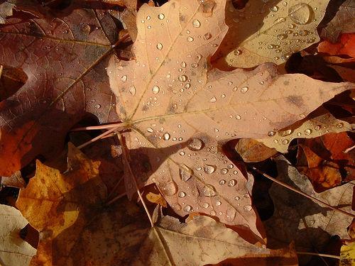 leaf fertilizer photo
