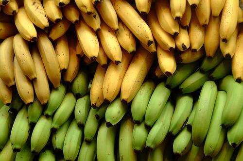 bananas photo