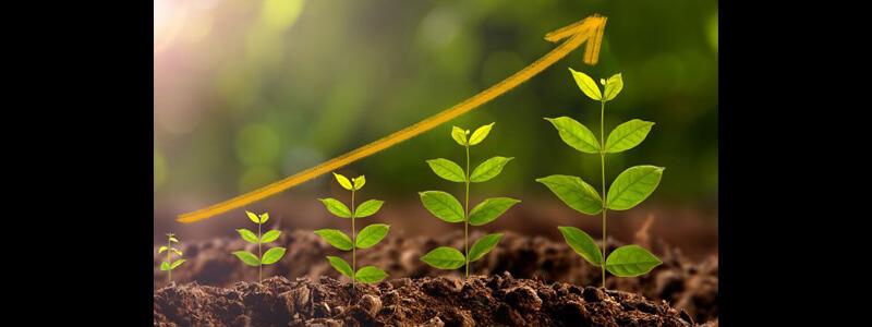 trading-log-growth