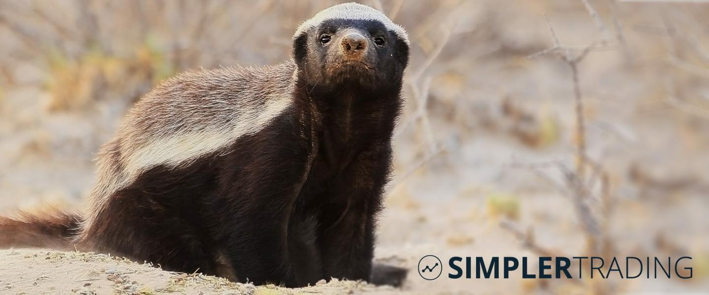 Simpler Summary on Honey Badger Stocks