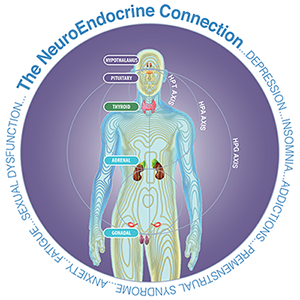 The NeuroEndocrine Connection