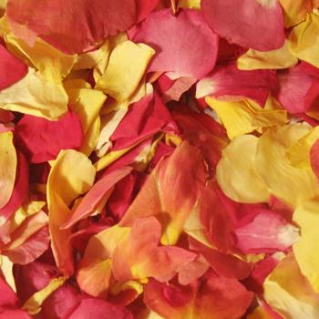 Bright Sorbet Dried Rose Petals