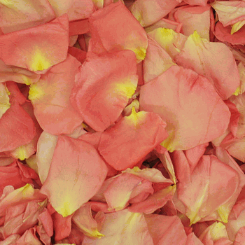 Cherish Pink Dried Rose Petals