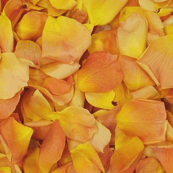 Popping Mango Dried Rose Petals