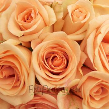 Alejandra Perfect Peach Rose