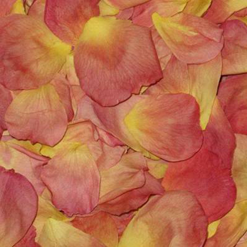 Amber Sunset Dried Rose Petals